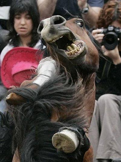 スペインの馬祭り05
