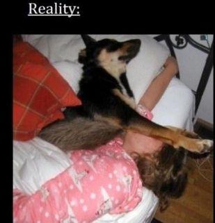 ペットと寝る理想と現実02