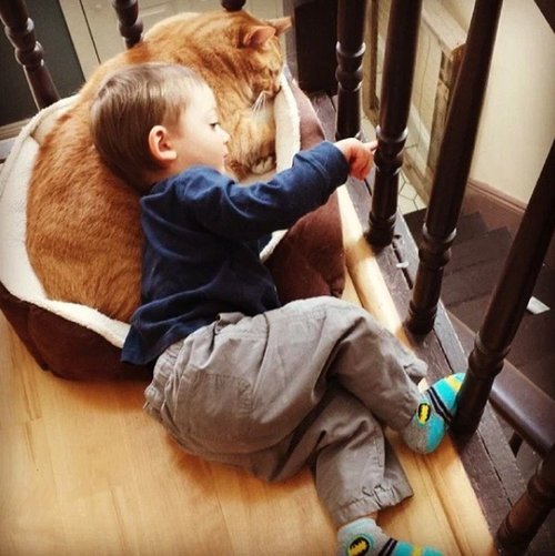 赤ちゃんの育ての親は猫08