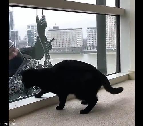 猫と窓掃除人が出会ったら03