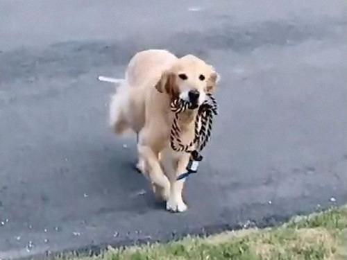 散歩が待ちきれない犬02