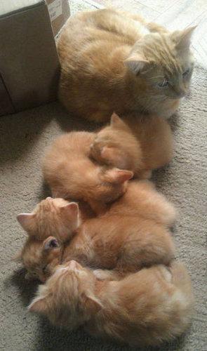 自慢の子猫たち26