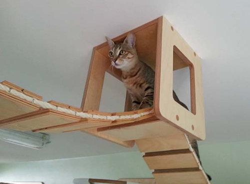 猫用のつり橋01