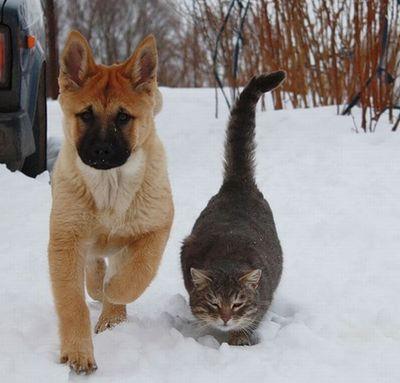 ロシアの犬と猫01