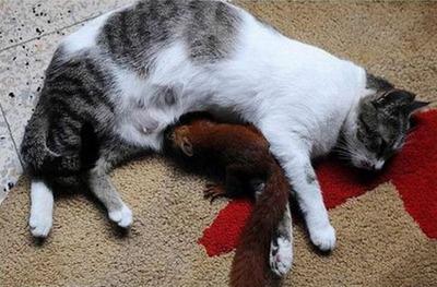 リスと猫05
