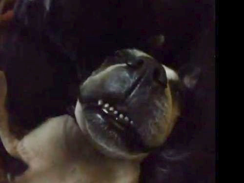 犬が起きた音01