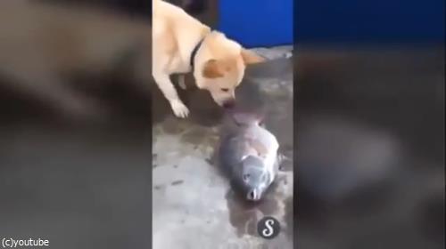 魚を助ける犬02