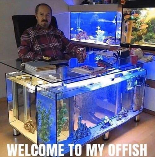 水族館気分を味わいたい人のオフィス01