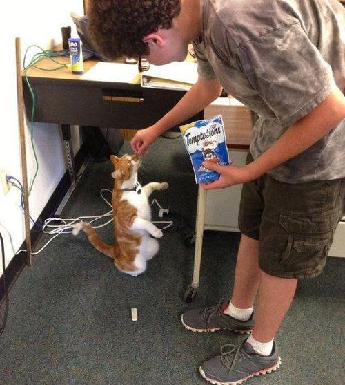毎日高校に通う猫12