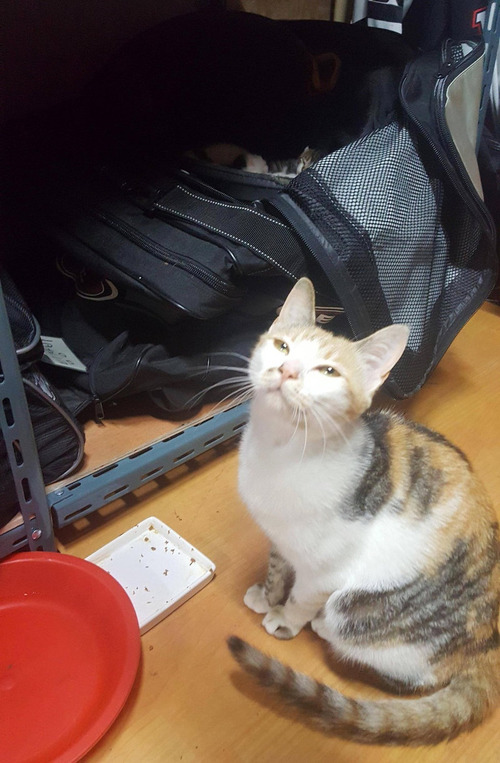 ホッケーのバッグで猫が子育て01