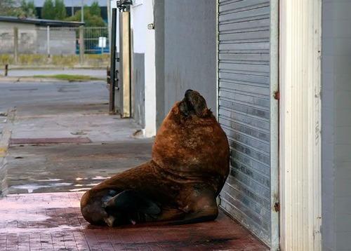 街中に出現した野生動物07