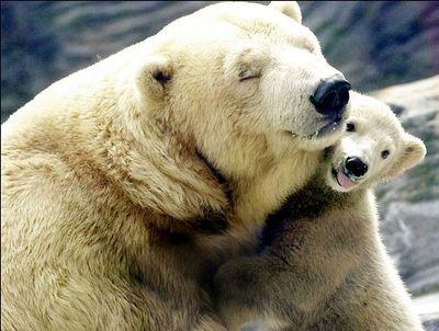 親子愛であふれる動物たち09