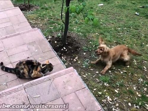 庭に入れさせない猫vs入りたい犬01