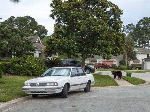 住宅街にクマが侵入02