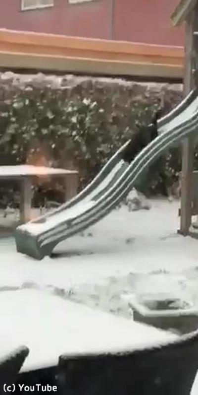 猫、雪の中でも元気いっぱい04