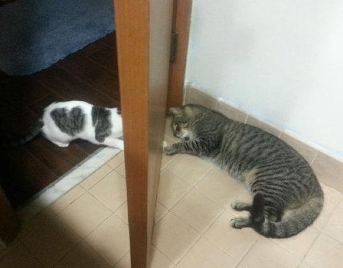 ハート泥棒な猫02
