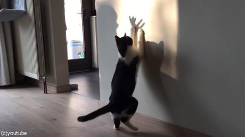 猫VS影絵05