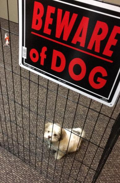 「猛犬注意」の看板08
