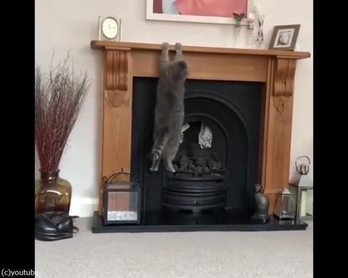 猫、暖炉に上ろうとするも失敗03