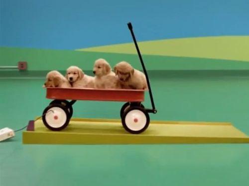 犬たちのピタゴラスイッチ00