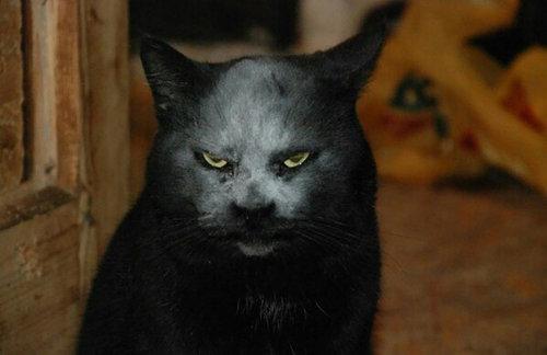 小麦粉をかぶった黒猫02