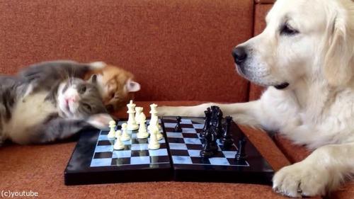 猫がチェスの審判をすると…04