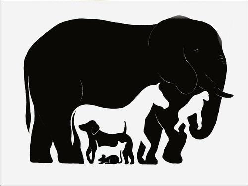動物園に働く人、最近動物に変化ある?