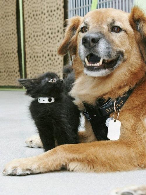 ハリケーン・カトリーナから救出された犬、猫のお母さん役となる06