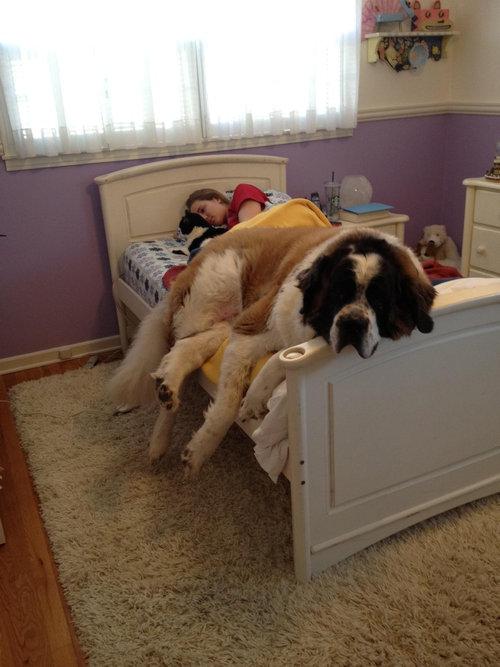 大きなベッドが欲しい01