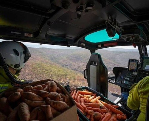オーストラリア森林火災で動物たちの食料供給02