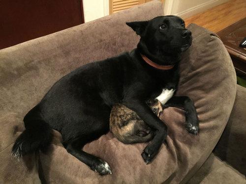 落雷から猫を守る犬01