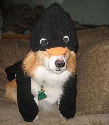 コーギー犬コスプレ10