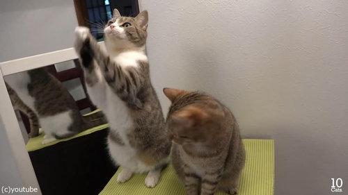 猫10匹と大きな鏡10