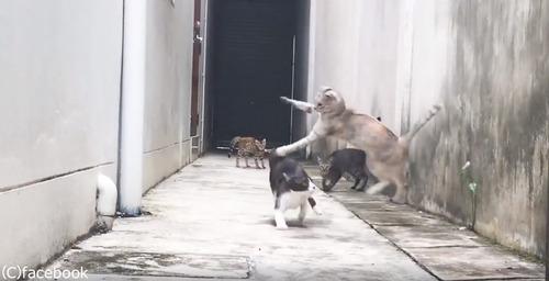 この猫の躍動感よ05