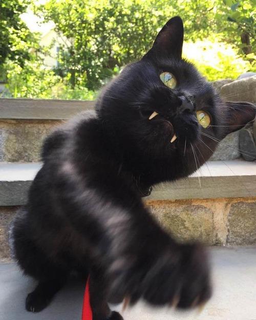 吸血鬼みたいな黒猫03