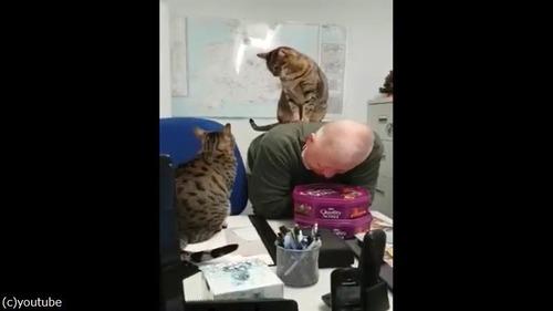猫のケンカに巻き込まれた男性04