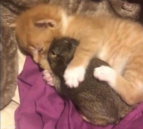 猫の赤ちゃん、ウサギの赤ちゃんを抱きしめる02