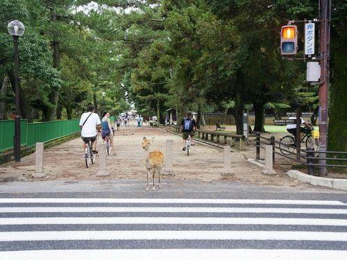 奈良の鹿と外国人01