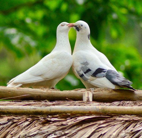 動物たちのキス06