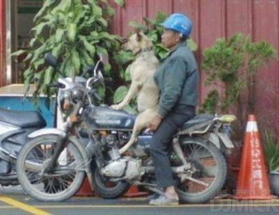 自転車やバイクに乗る犬たち02