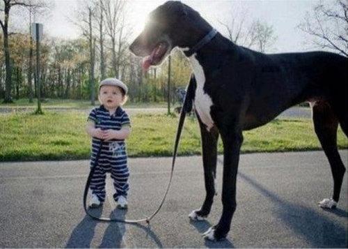 大きな犬のトラブル09