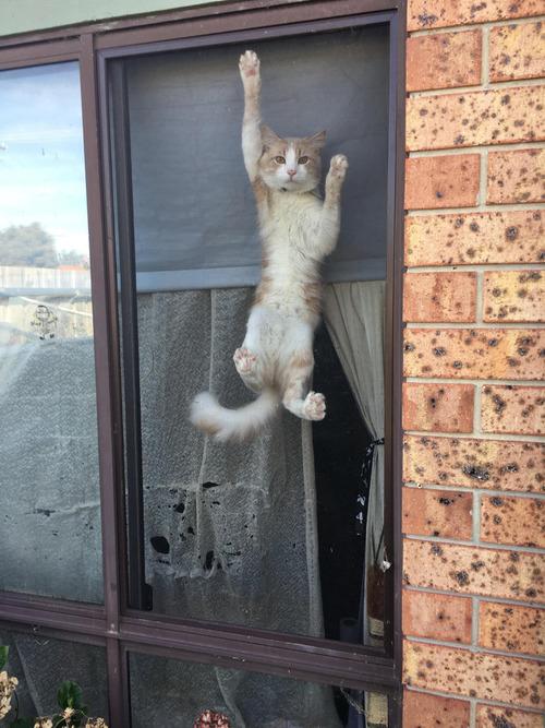帰宅したら猫が待ち構えていた01