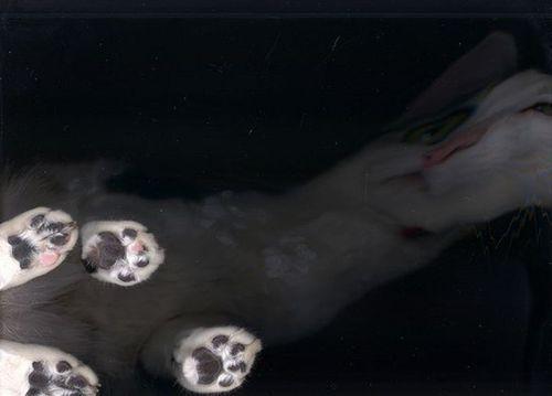 猫スキャン06