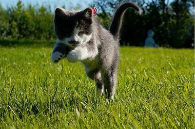 盲目の猫07