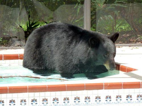 プールに動物18
