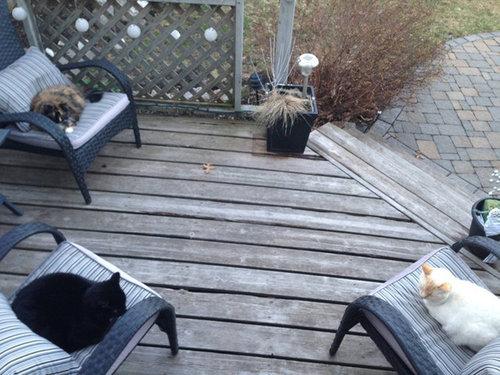 密談する猫たち15