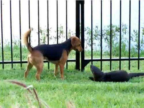 犬とカワウソ