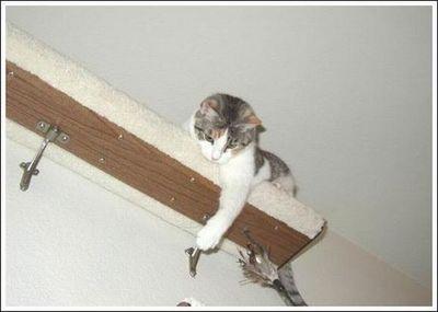猫用の足場09