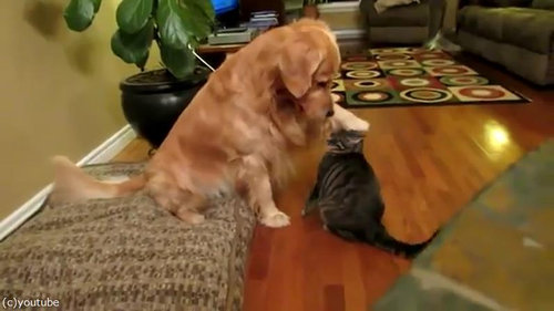 犬にハグする猫02
