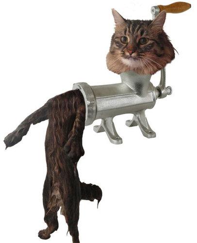 濡れた猫10